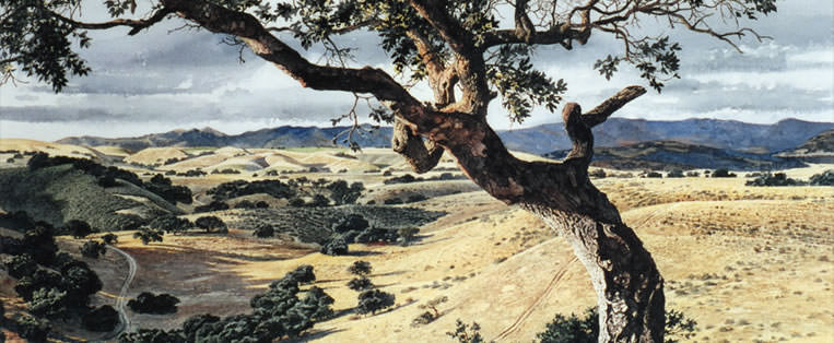 Santa Ynez Valley, Oak . watercolor . private collection